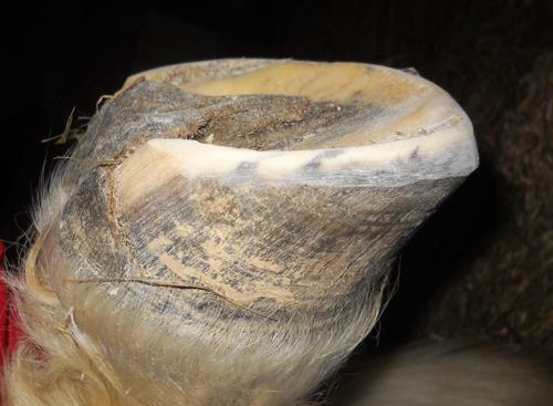 Kurt's toe is beveled from the solar ridge forward.