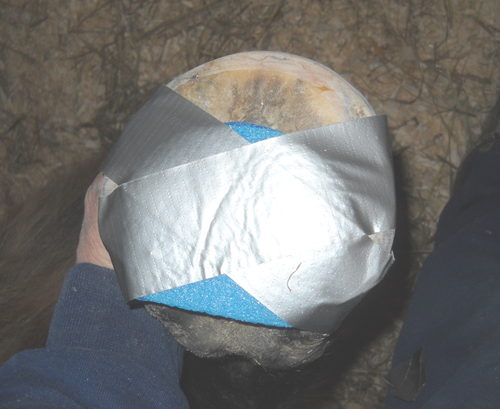 The foam is taped in place and does not extend beyond the tip of the frog. Two pieces of tape are showing in this image, but I also add one from the foam over the toe to prevent the foam from moving forward or backward.