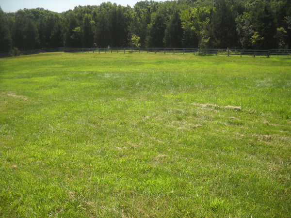 The same pasture on July 12, 2015, a month after application of weed killer.