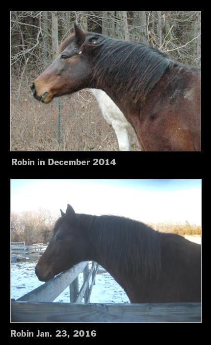 Robin comparison 2016